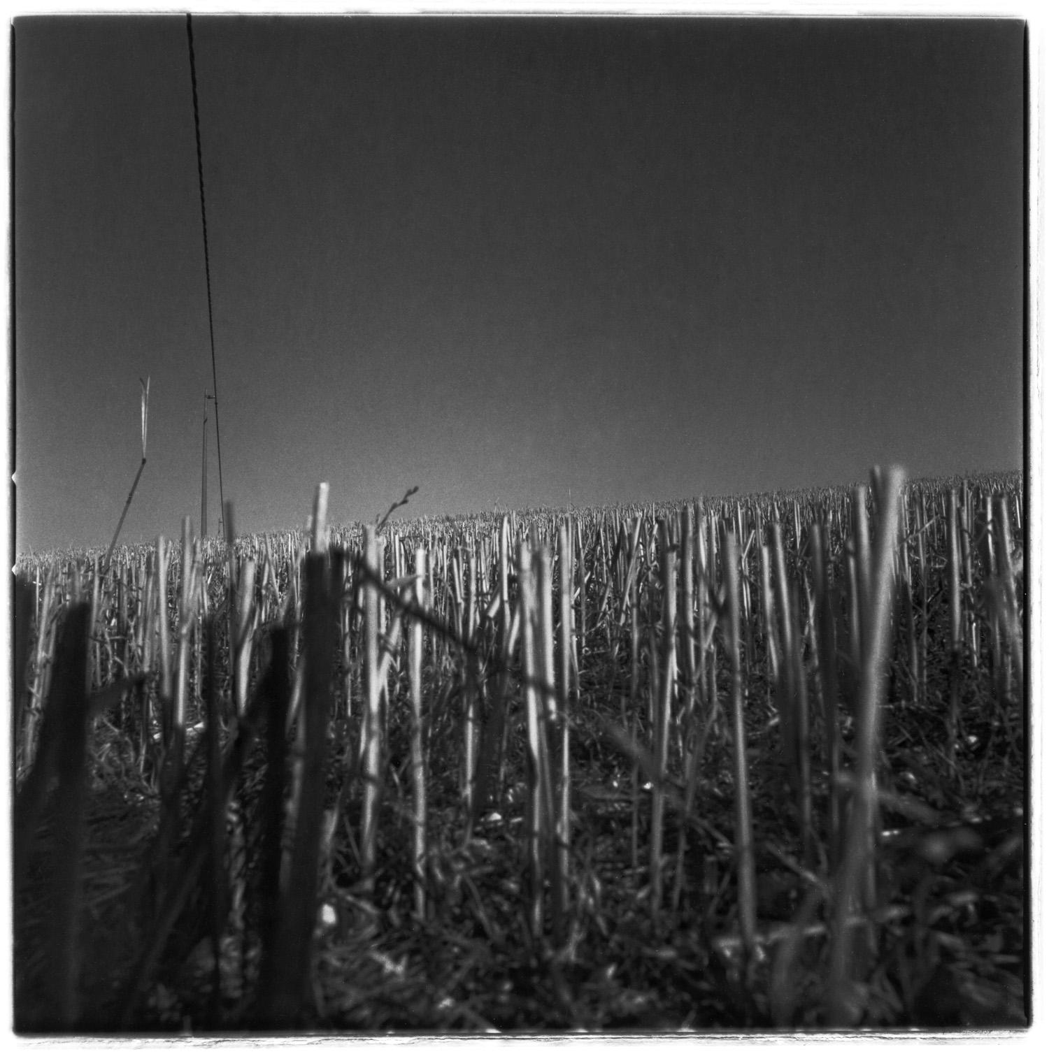 CUT GRASS, web.jpg