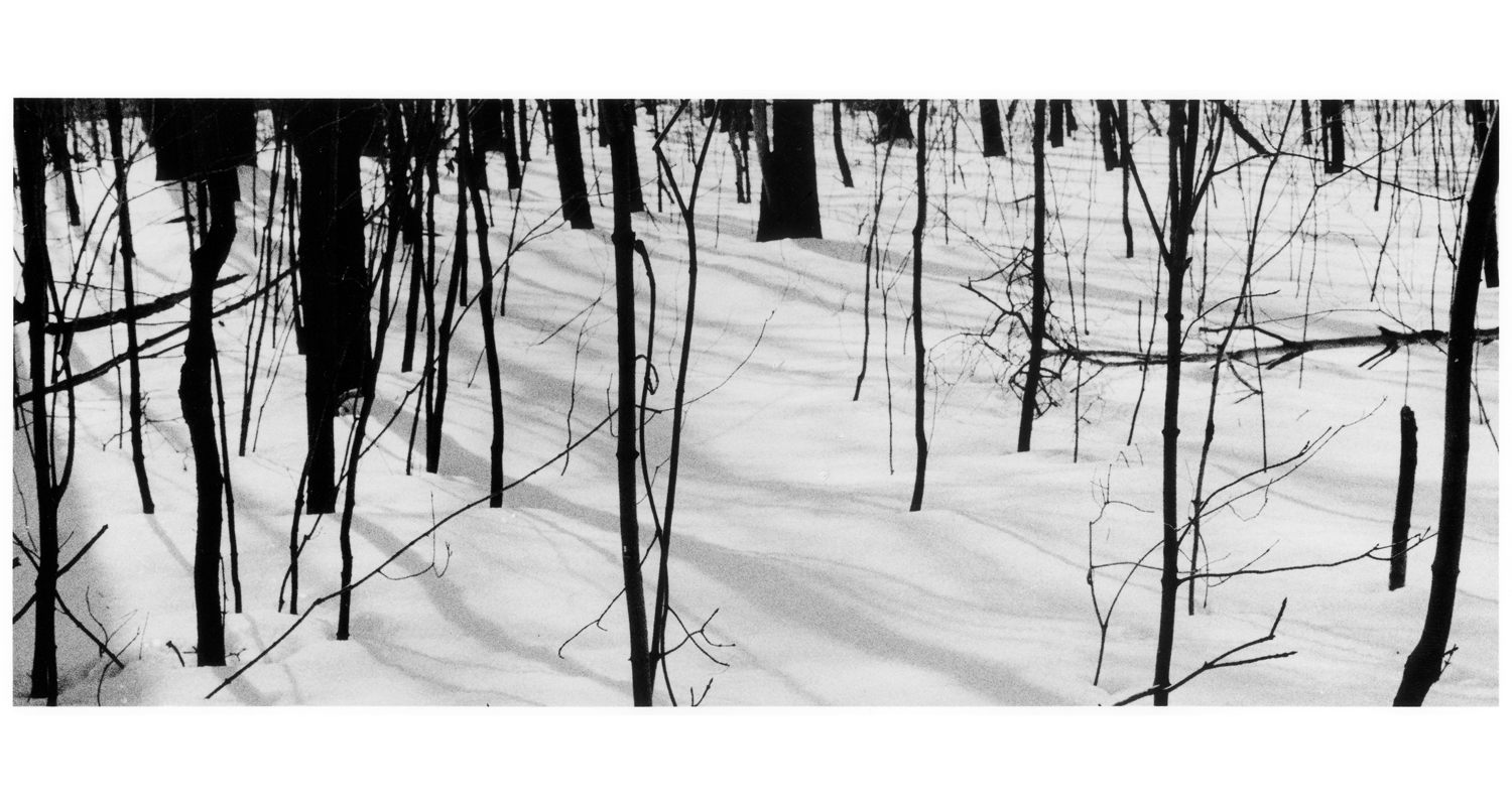 TREES IN THE SNOW, web.png