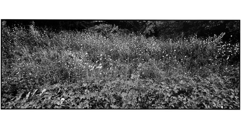 FLOWERS AGAINST BLACK, web.png
