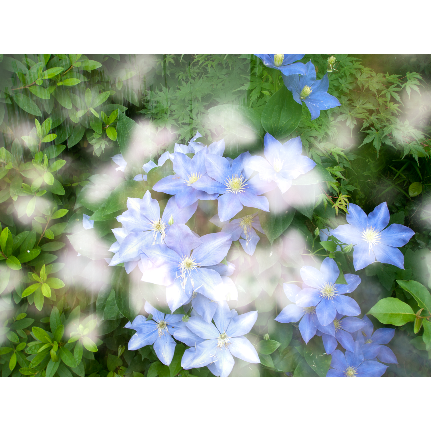 JAPANESE FLOWERS, web.png