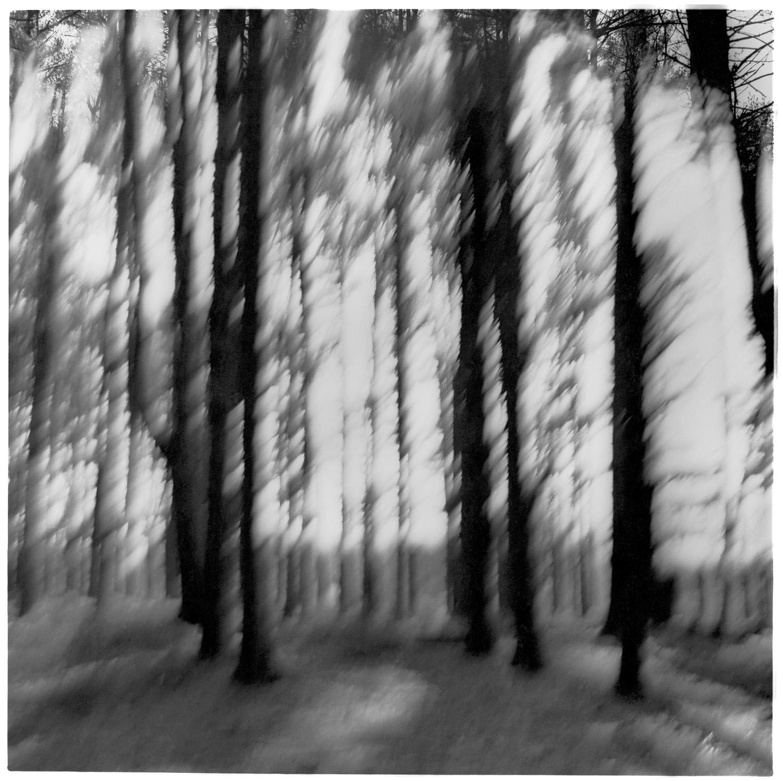 FANTASY FOREST CORNER, web.jpg