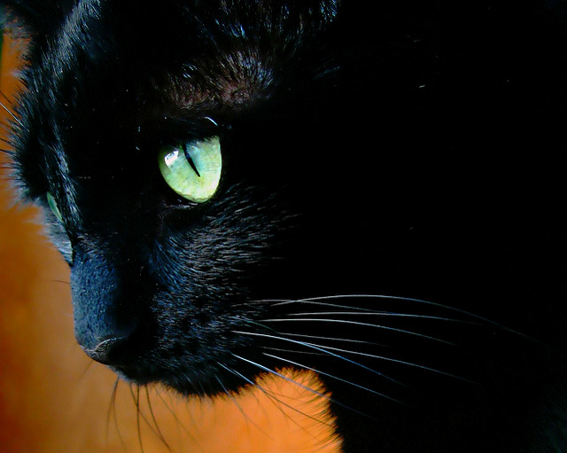 BLACK CAT by  GABRIEL HESS    CREATIVE COMMONS   FLICKR