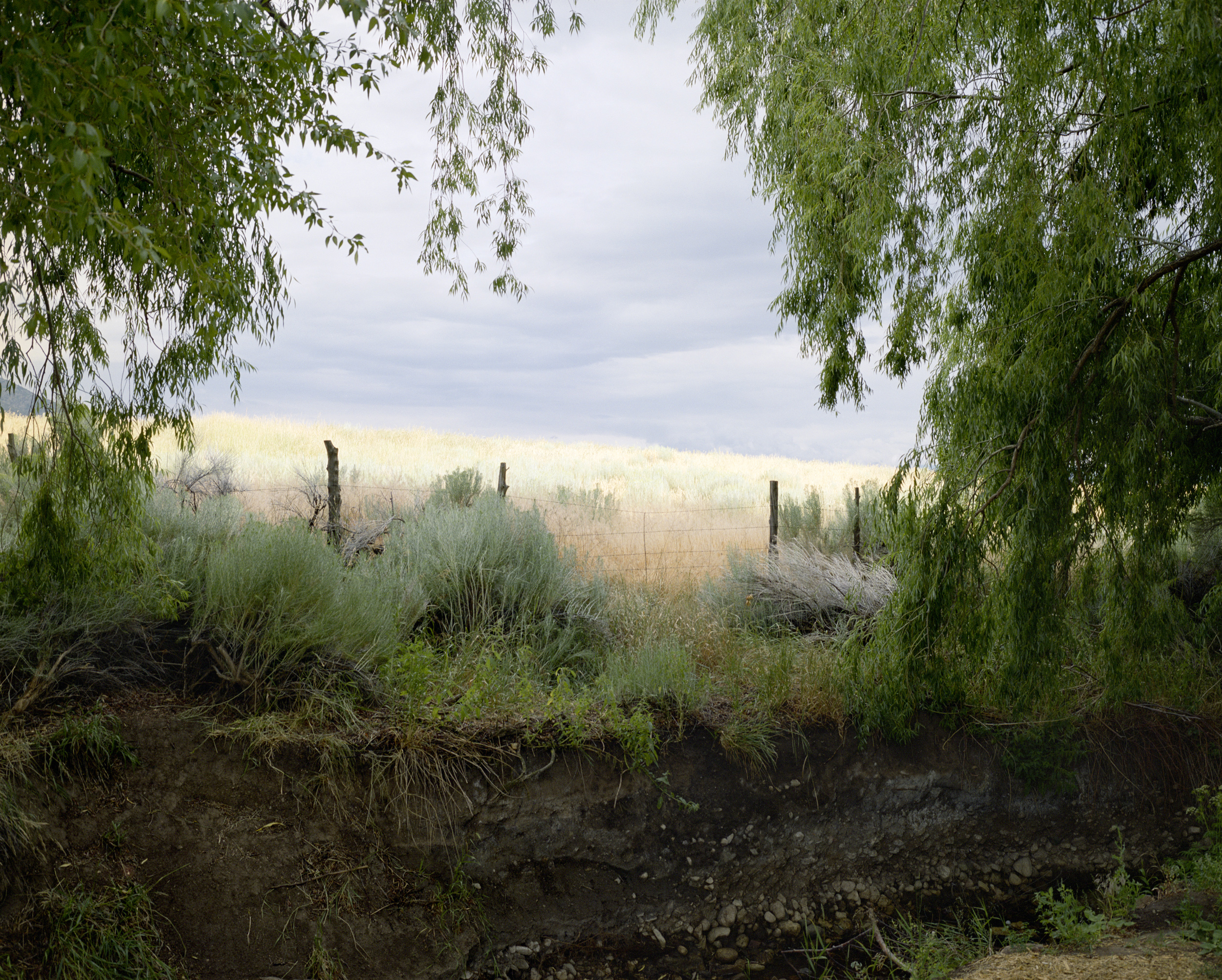 Clearing (Arroyo Seco, New Mexico)