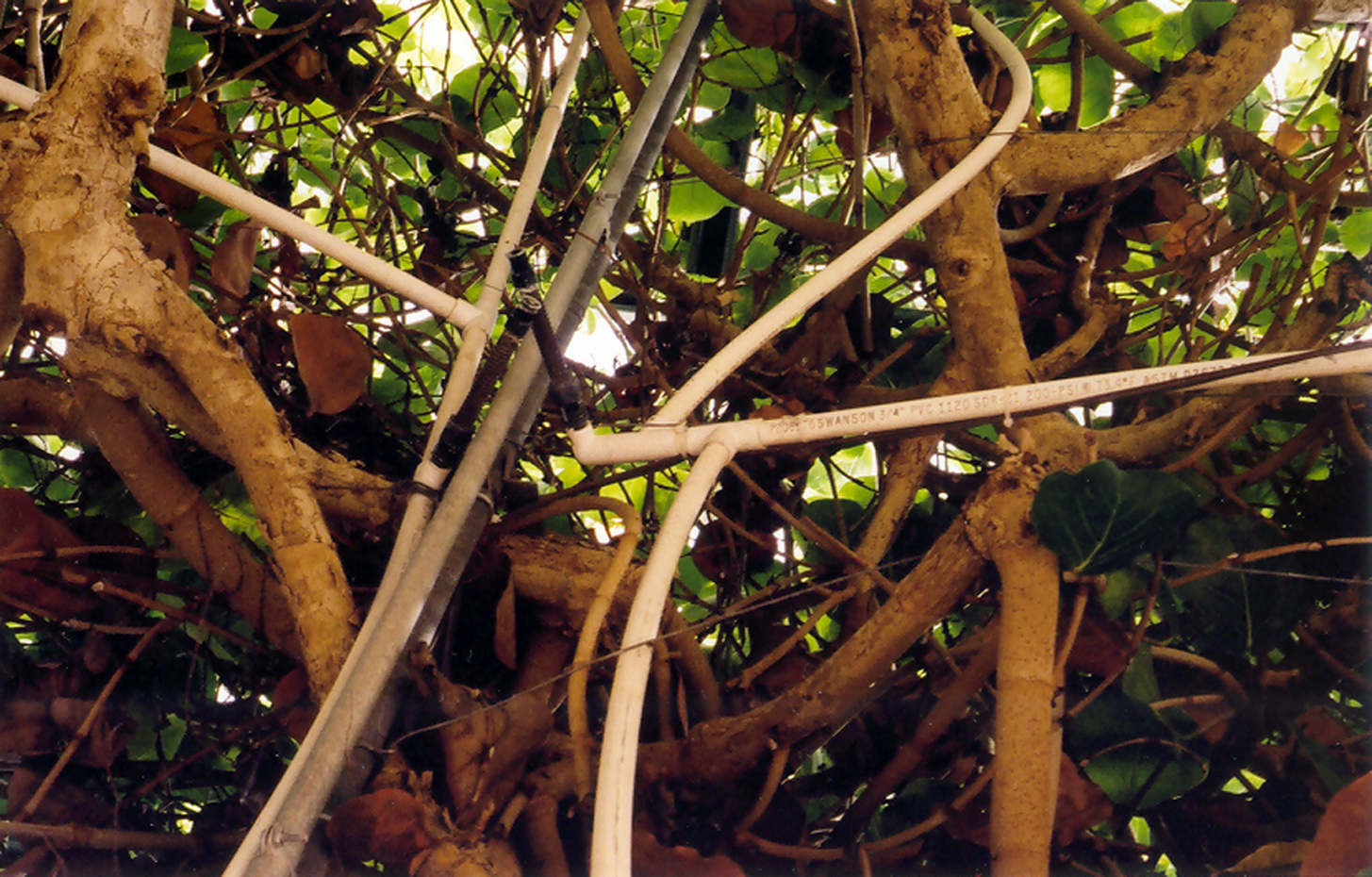 biosphere4_8x10.jpg