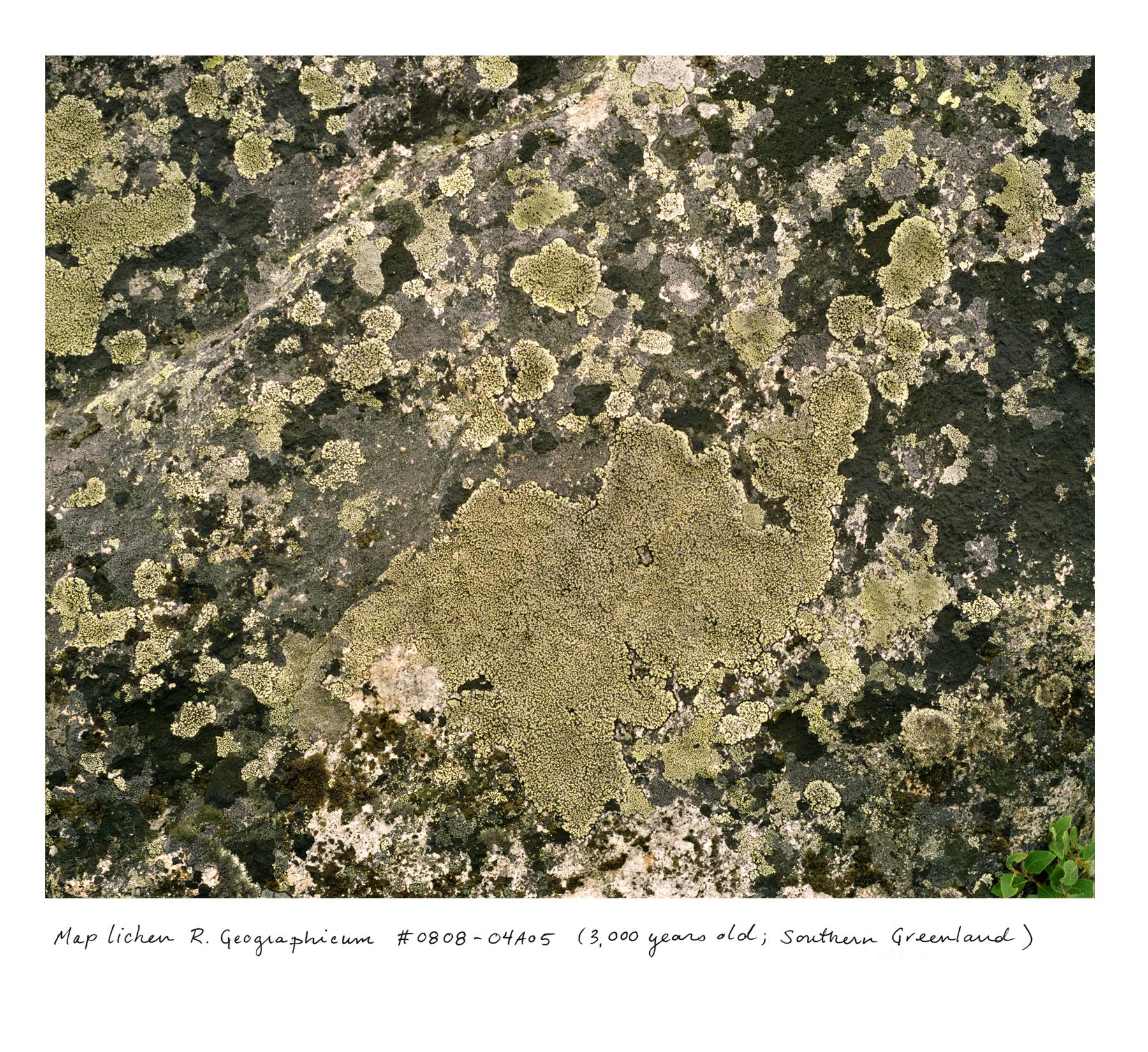 Greenland_lichens_0808_04a05.jpg