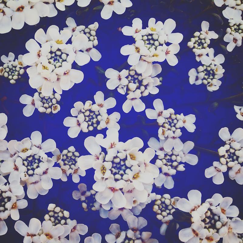 YoheiKoinuma_Floral_FlowerintheSquare_01.jpeg