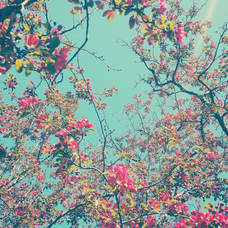 YoheiKoinuma_Floral_FlowerintheSquare_03.jpeg