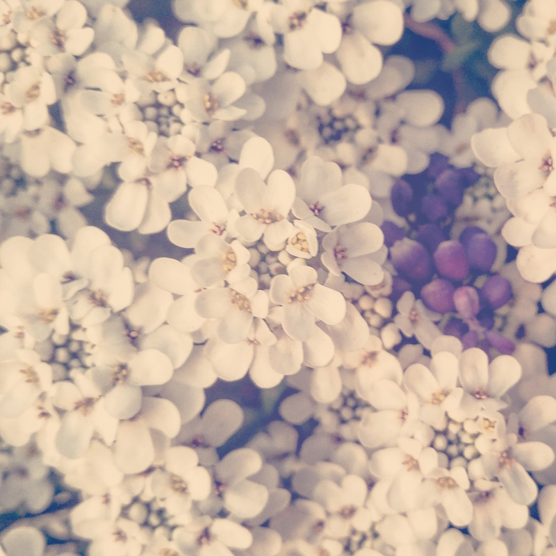 YoheiKoinuma_Floral_FlowerintheSquare_05.jpeg