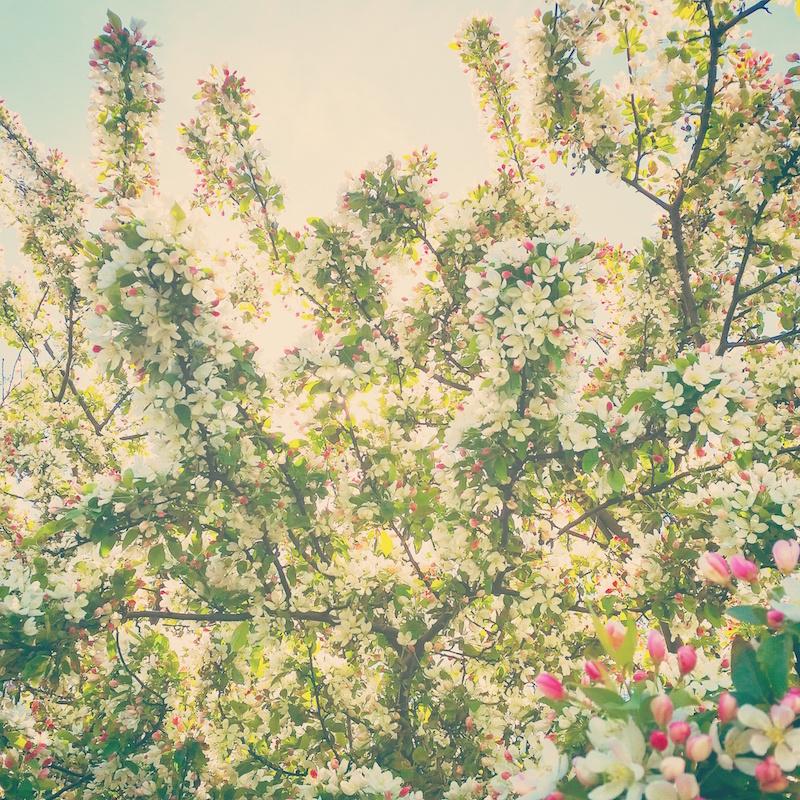 YoheiKoinuma_Floral_FlowerintheSquare_10.jpeg