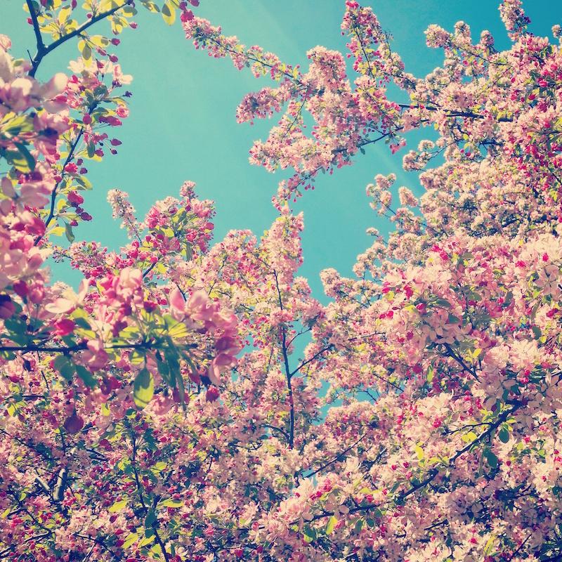 YoheiKoinuma_Floral_FlowerintheSquare_09.jpeg