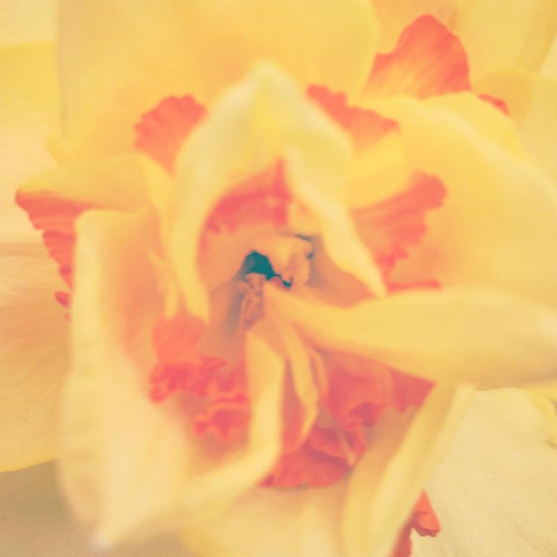 YoheiKoinuma_Floral_FlowerintheSquare_20.jpeg