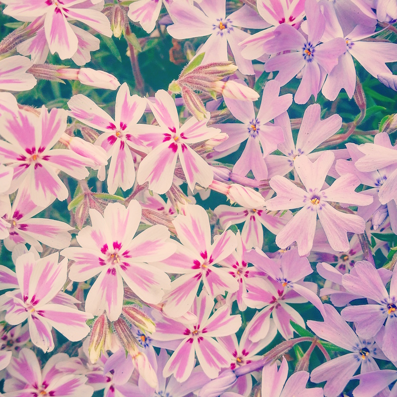 YoheiKoinuma_Floral_FlowerintheSquare_21.jpeg