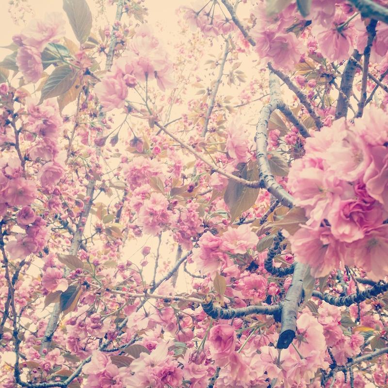 YoheiKoinuma_Floral_FlowerintheSquare_23.jpeg