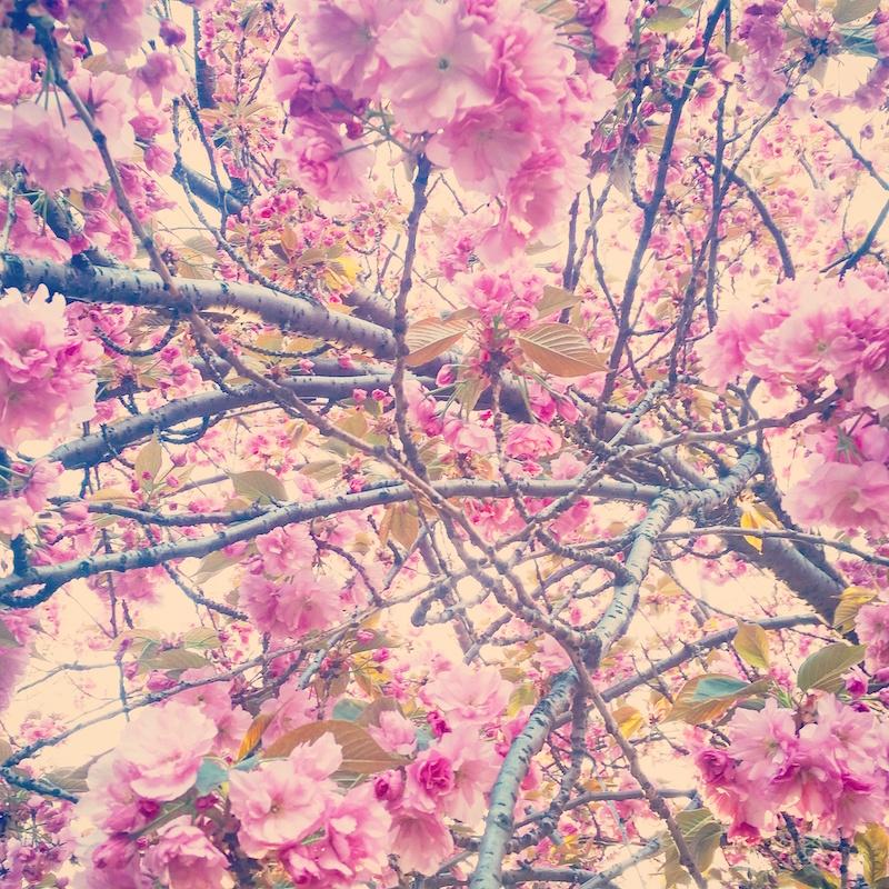 YoheiKoinuma_Floral_FlowerintheSquare_25.jpeg