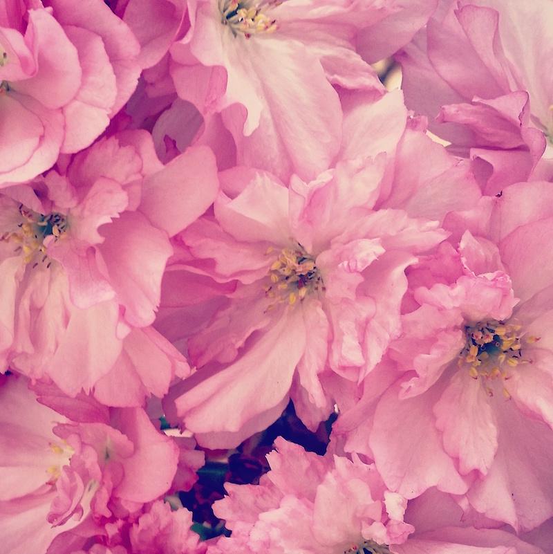 YoheiKoinuma_Floral_FlowerintheSquare_31.jpeg