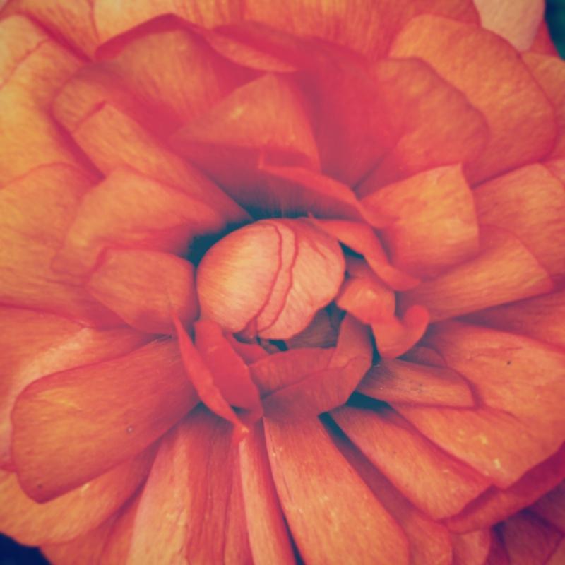 YoheiKoinuma_Floral_FlowerintheSquare_34.jpeg