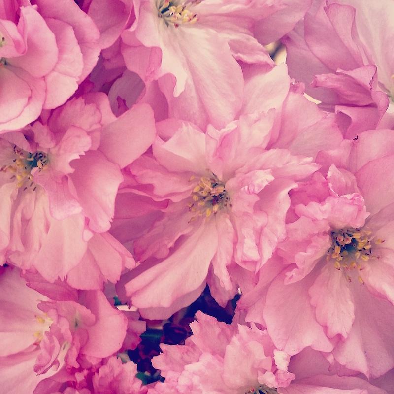 YoheiKoinuma_Floral_FlowerintheSquare_40.jpeg