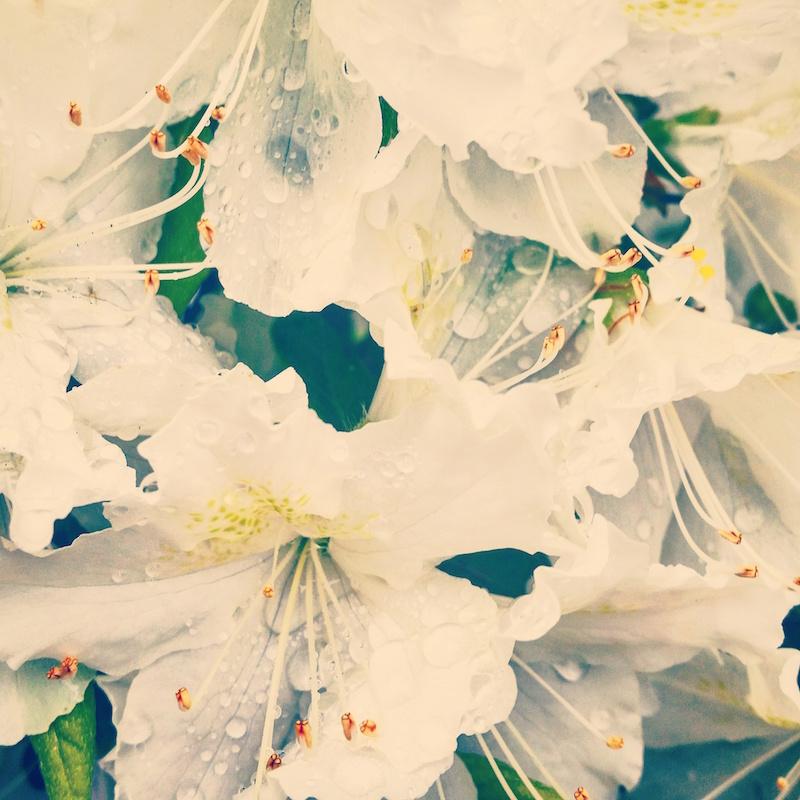 YoheiKoinuma_Floral_FlowerintheSquare_43.jpeg
