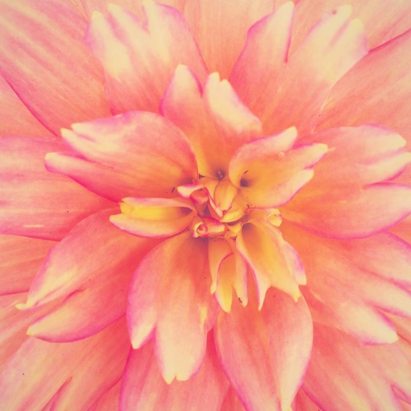YoheiKoinuma_Floral_FlowerintheSquare_44.jpeg
