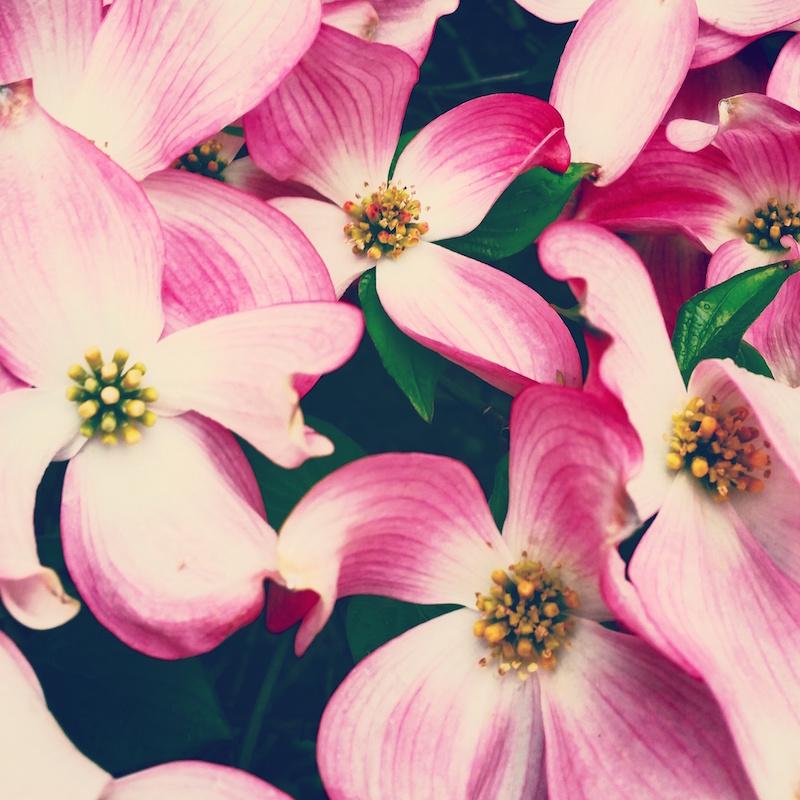 YoheiKoinuma_Floral_FlowerintheSquare_45.jpeg