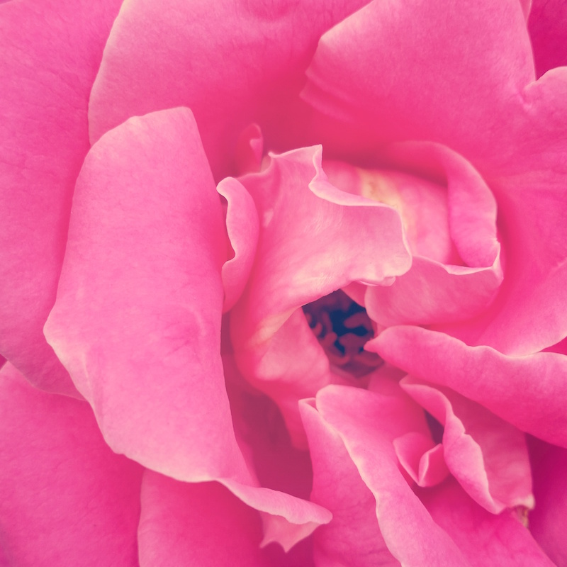 YoheiKoinuma_Floral_FlowerintheSquare_49.jpg