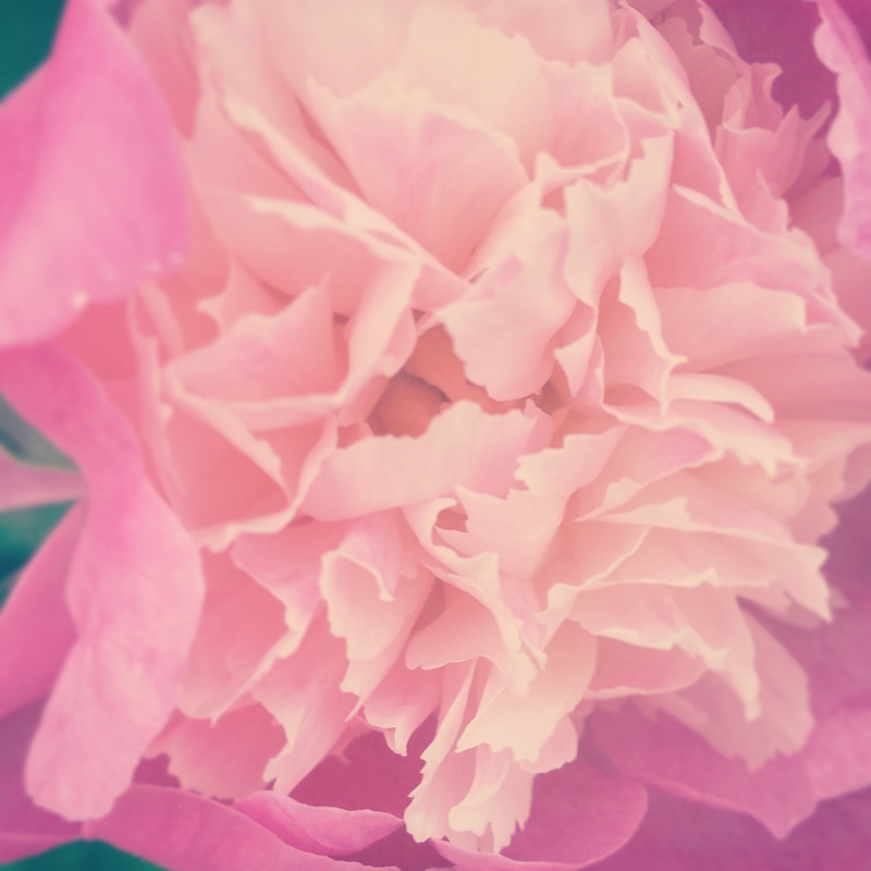 YoheiKoinuma_Floral_FlowerintheSquare_50.jpg