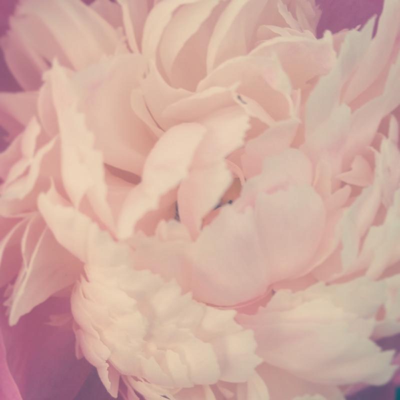 YoheiKoinuma_Floral_FlowerintheSquare_51.jpg