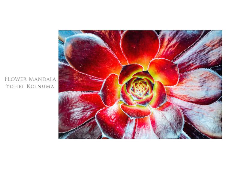 00_IBM_Flower-Mandala.jpg