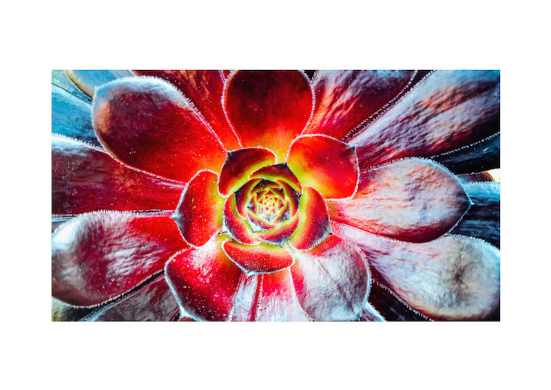 01_IBM_Flower-Mandala.jpg