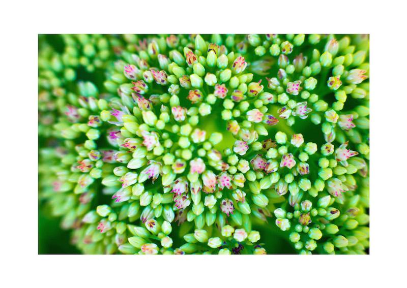 05_IBM_Flower-Mandala.jpg