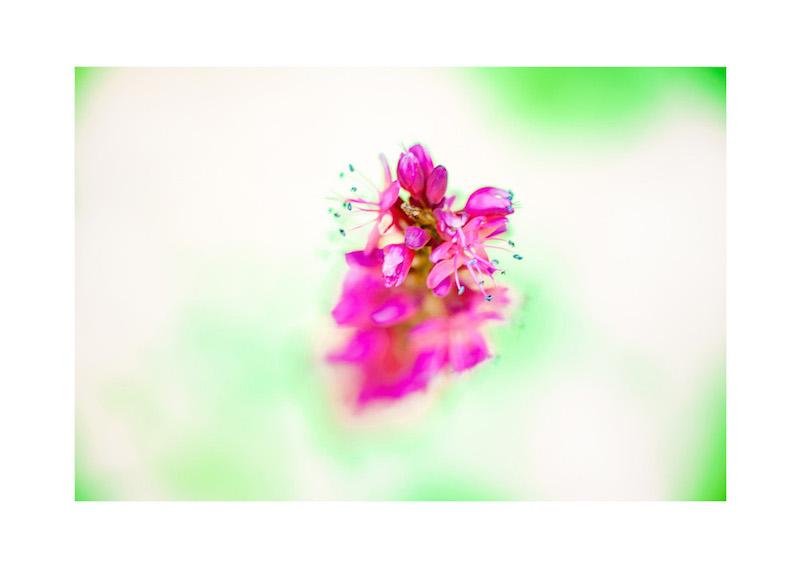 09_IBM_Flower-Mandala.jpg