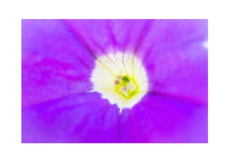 11_IBM_Flower-Mandala.jpg