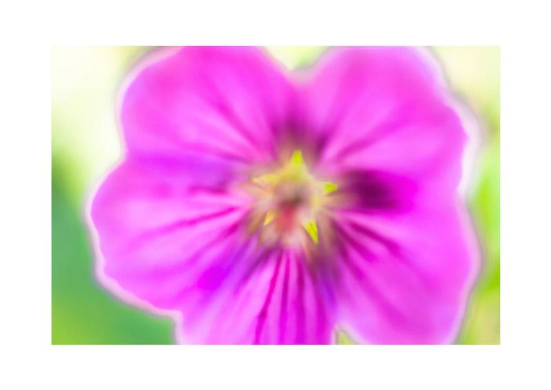 14_IBM_Flower-Mandala.jpg
