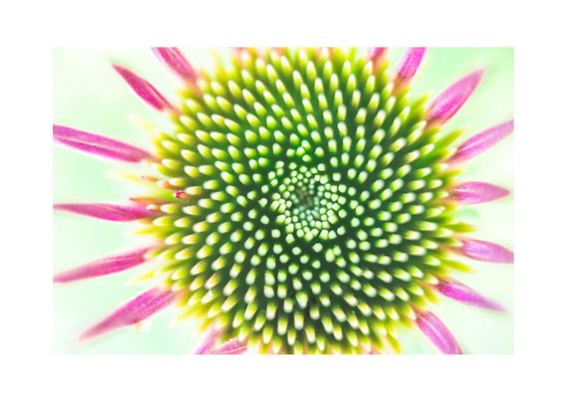 15_IBM_Flower-Mandala.jpg
