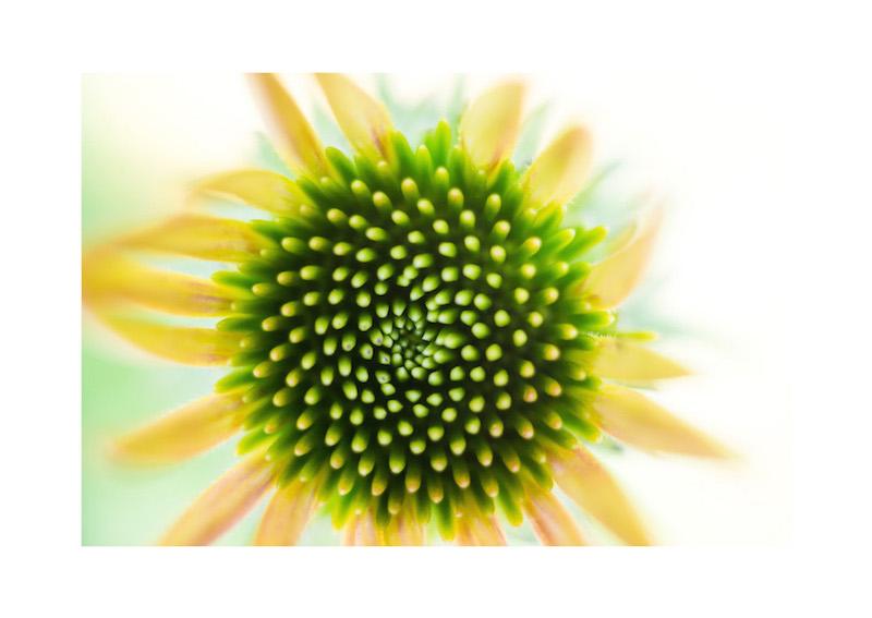 18_IBM_Flower-Mandala.jpg