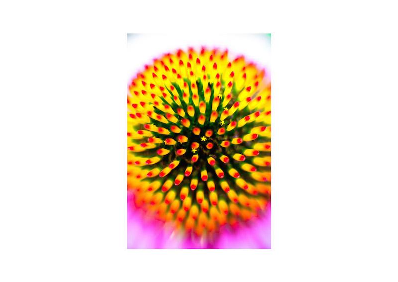19_IBM_Flower-Mandala.jpg