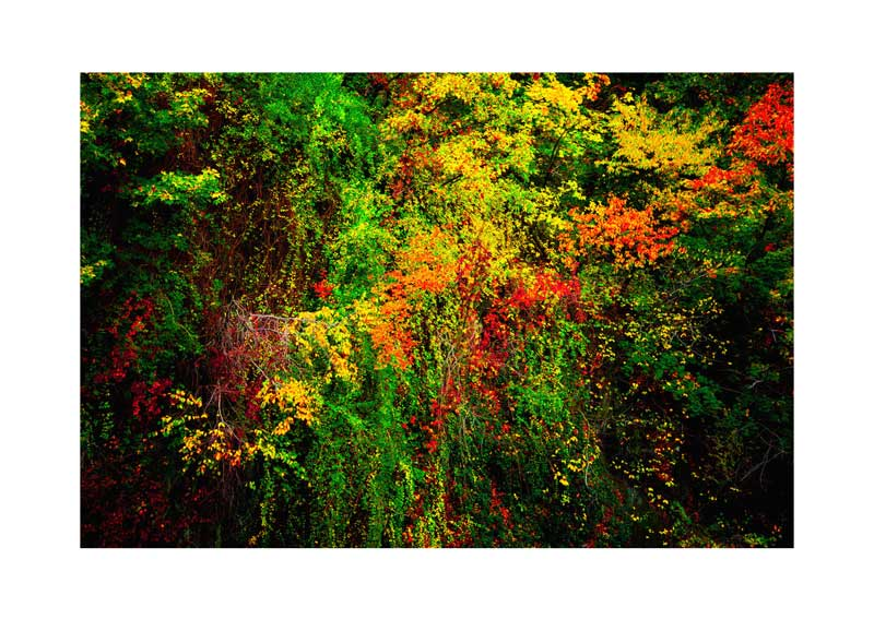 10_YoheiKoinuma_Brilliant-Trail.jpg