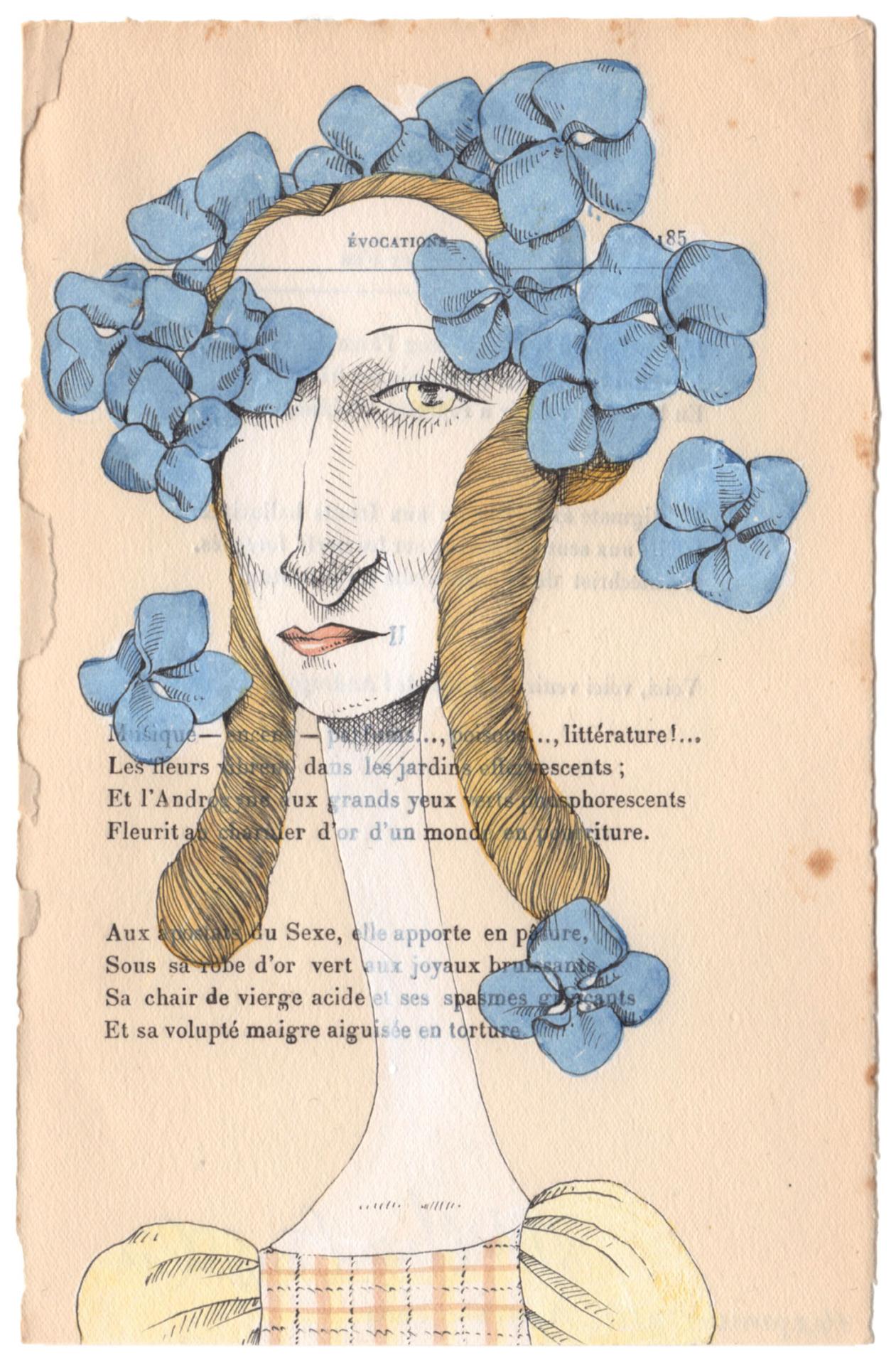 Blue Hydrangea  , 2015