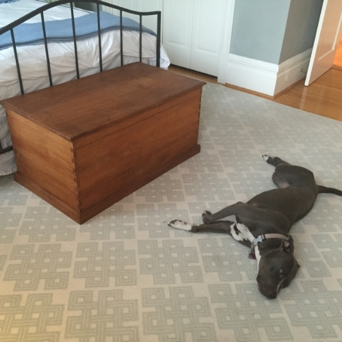 Chest and bed both inherited, photobombing dog is all ours.