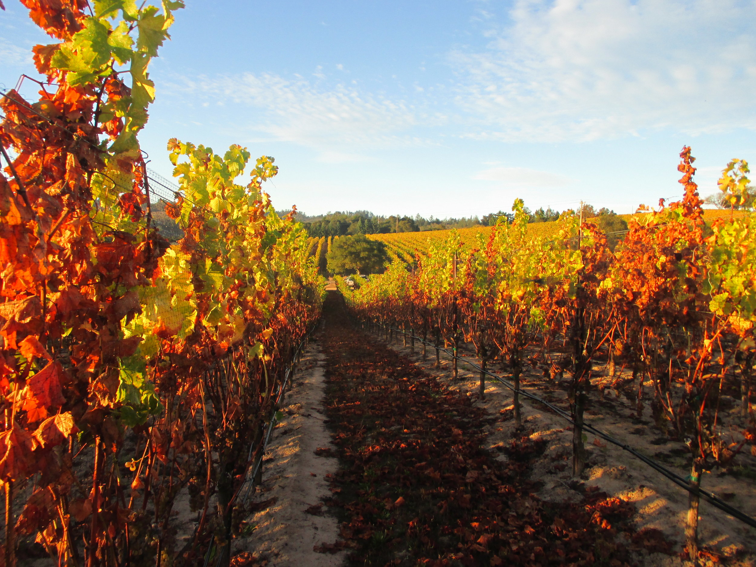 Meredith Estate: Merry Edwards Winery
