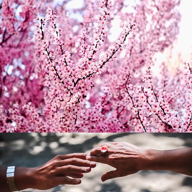 Celebrate Spring, Rosé, Community. Who says we can't multi-task? . The annual Pink Party in the Barndiva Gardens on April 14 will host #40 extraordinary producers. There will be food. There will be music. There will be rosé wine collections raffled - everyone pouring contributes- to benefit Corizón Healdsburg. For tickets (going fast dear friends) shop.barndiva.com. 💗💗💗