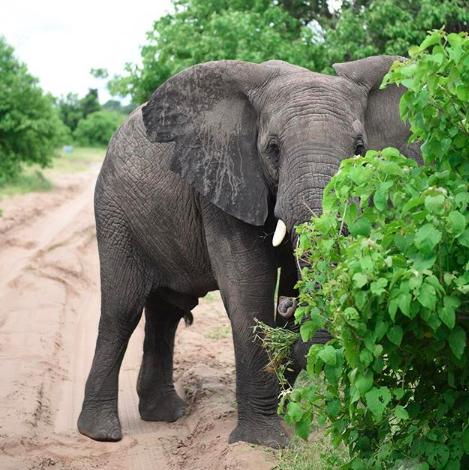 Peek a boo | Botswana, Africa