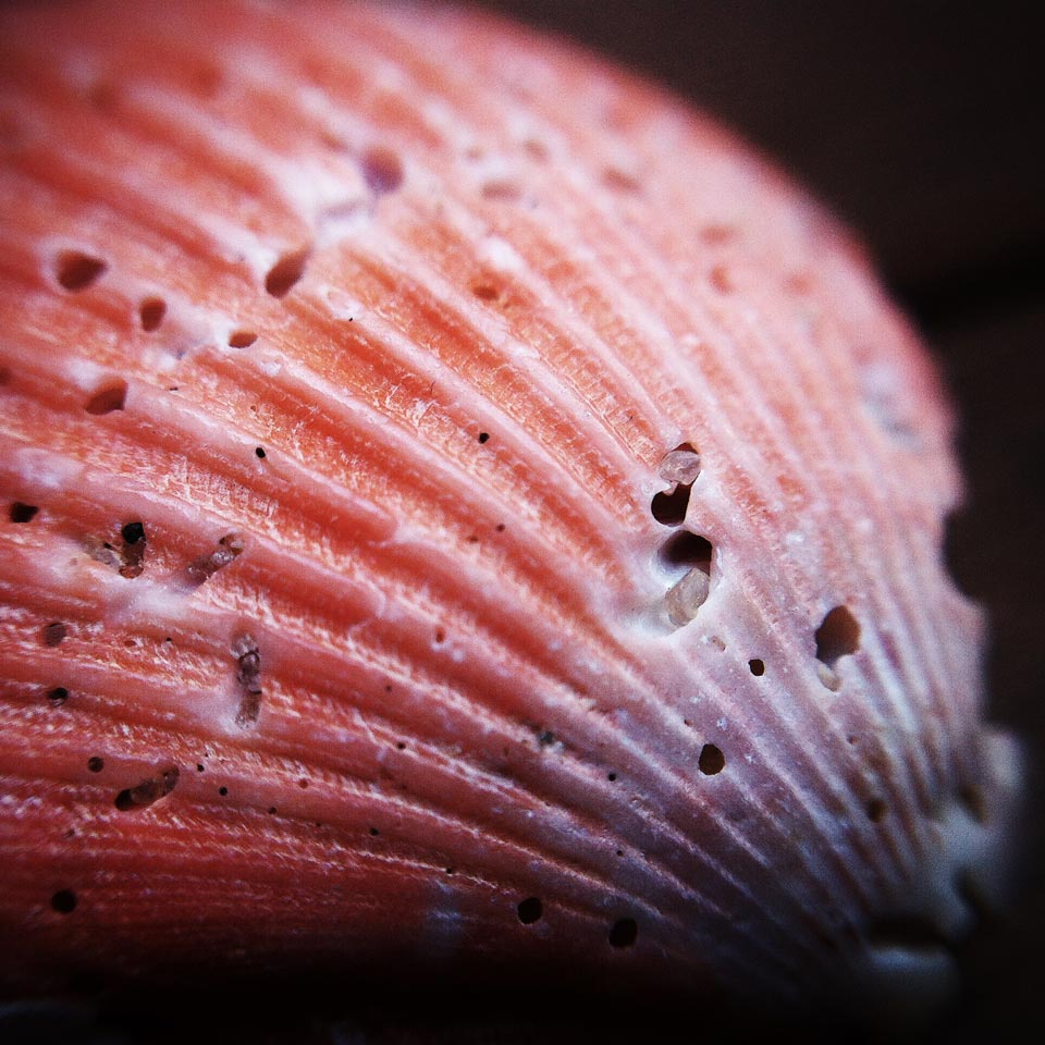 iPhone macro photography using Shoulderpod S1 as a stand