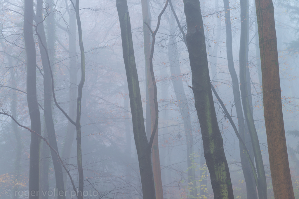 Last of autumn II.jpg