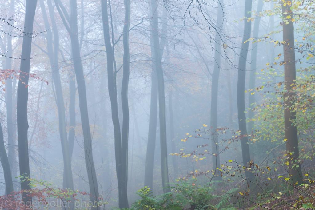 Last of autumn IV.jpg