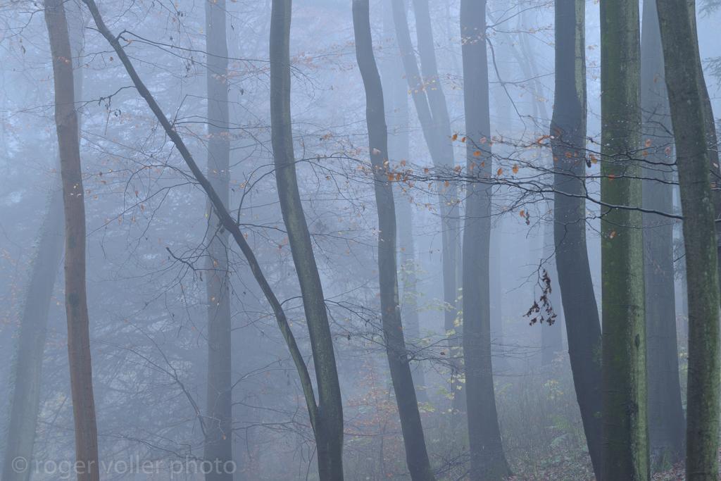 Last of autumn.jpg