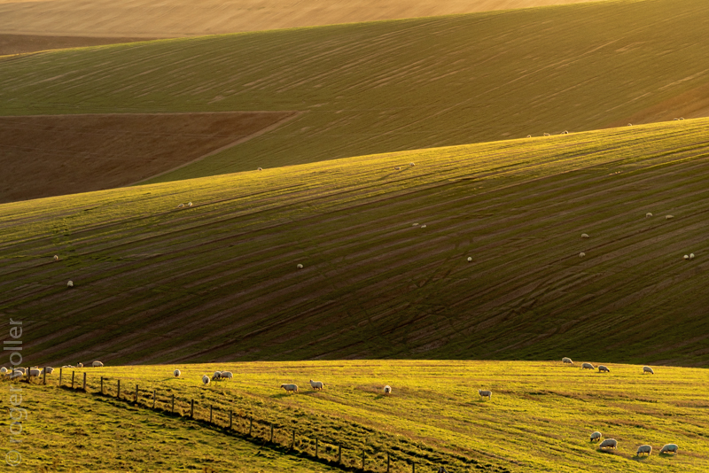Free Range - South Downs, West Sussex