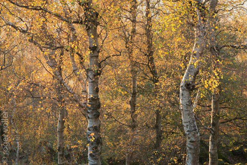 Autumn in the peaks I.jpg