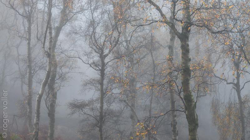 Autumn in the peaks III.jpg