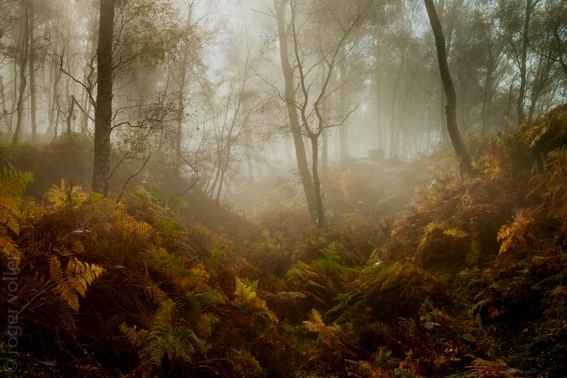 Autumn in the peaks IV.jpg